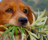 Toxic plants that can poison your dog or cat