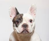 Your pet's fears exposed