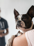 Fear Free Veterinary Visit